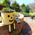 太陽の光を求めて動く植木鉢